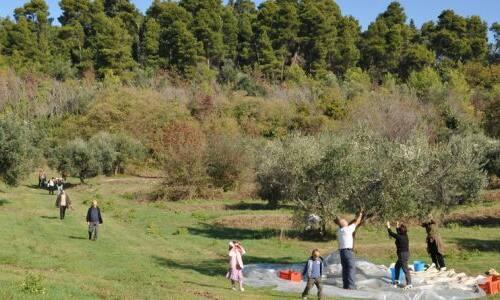 La Selva di Castelfidardo ottiene la certificazione di Forest bathing center