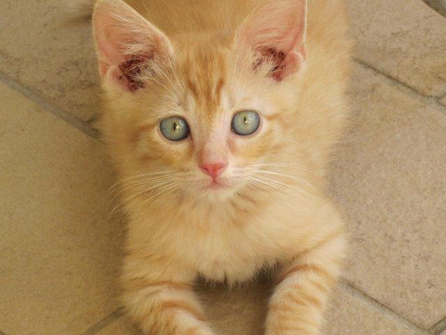 Oggi è la giornata nazionale del gatto: scopriamone caratteristiche e curiosità