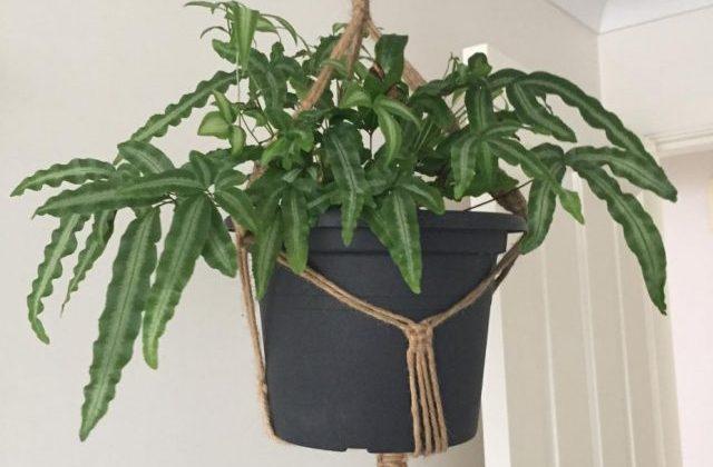 Le piante da bagno anche per chi non ha il pollice verde ...