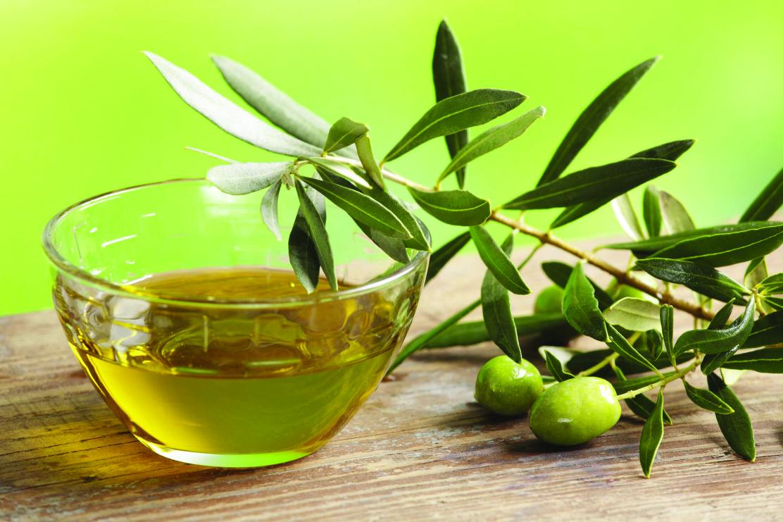 Marche, raccolta delle olive: un anno di alta qualità ma poca quantità