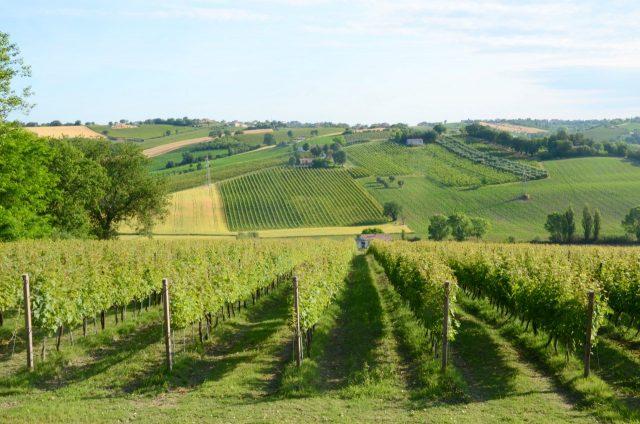 Premio Economia Marche 2020, vince una laureata Unimc con un progetto per una strada regionale del vino