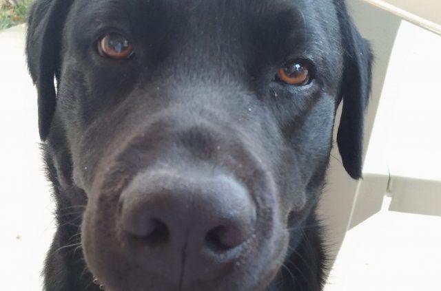 Jesi, al via l'appalto per la gestione dei cani randagi