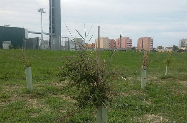 L'area verde del Bosco delle Saline a Senigallia
