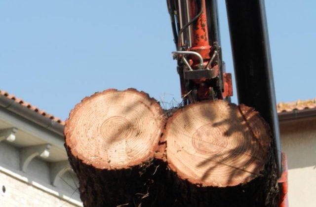 I primi alberi abbattuti
