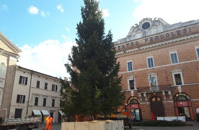 L'albero di Natale che adornerà con le sue luci Piazza della Repubblica