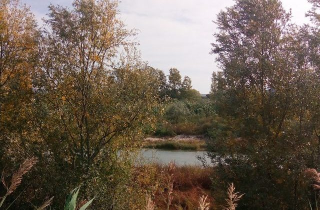 Pochissimi pesci nel fiume Esino, Jesi in Comune vuole spiegazioni