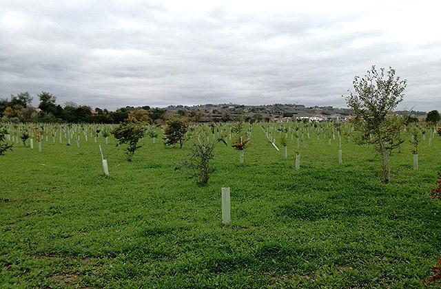Gli alberi piantati al parco della Cesanella a Senigallia