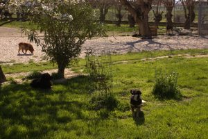 Alcuni cani del rifugio di Falconara Marittima
