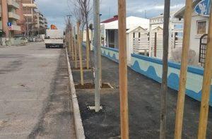 Gli alberi piantati al Cesano di Senigallia