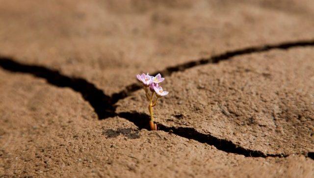 La resilienza: mi piego ma non mi spezzo