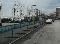 Marciapiede rifatto e alberi piantati al Cesano di Senigallia