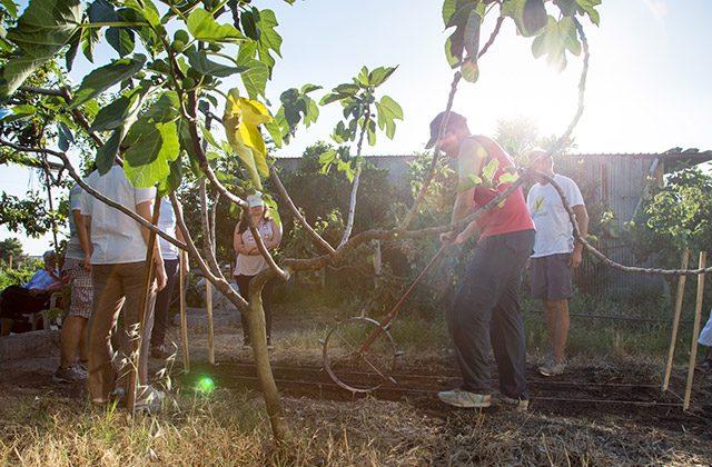 Agricoltura solidale: l'orto sociale promosso dalla Caritas di Senigallia