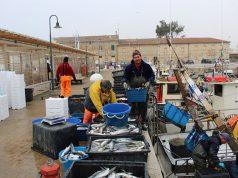pesca record a Senigallia di cefali o baldigare