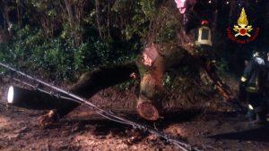 l'albero caduto ad Agugliano