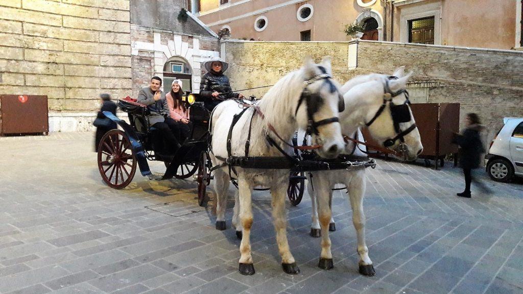 La carrozza con i cavalli per l'iniziativa del Comune