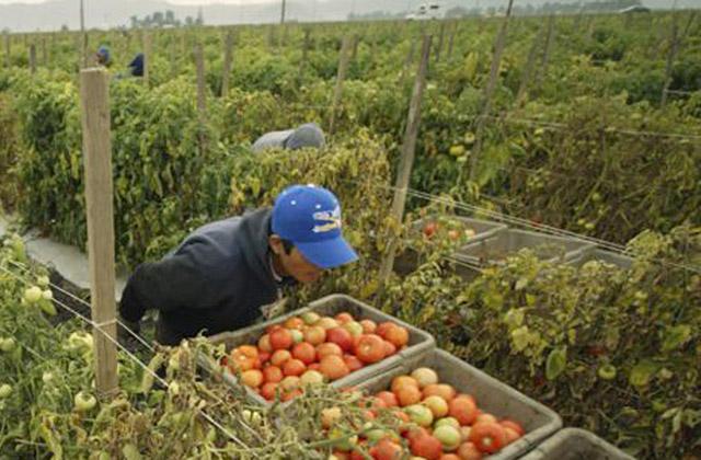 Il caporalato nell'agricoltura: braccianti stranieri come schiavi