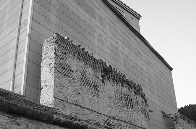 Piccioni (colombi urbani) sugli edifici di Senigallia