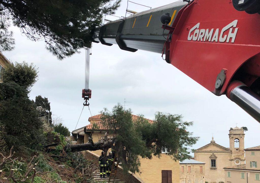 Un pino caduto sotto al Duomo di Ancona