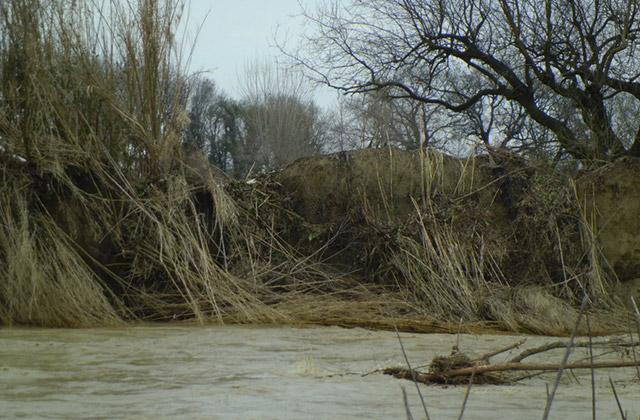 L'argine del fiume Misa in località Molino Marazzana, a Senigallia
