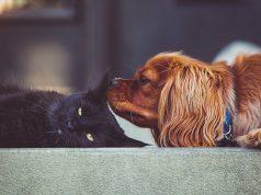 Gatti e cani: animali domestici o d'affezione