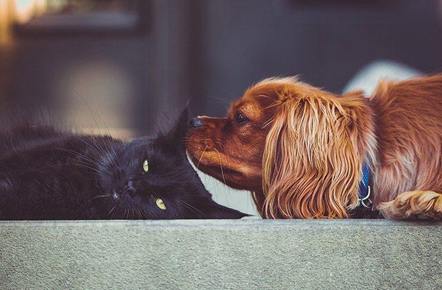sito incontri persone con animali domestici