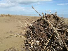 Detriti sulla spiaggia di velluto di Senigallia