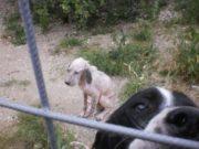I cani trovati in cattive condizioni