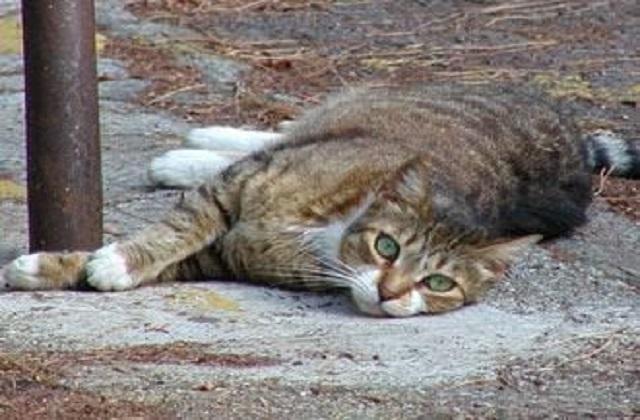 """Jesi, al via i lavori dell'oasi felina a """"scuola"""""""