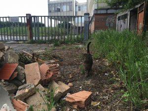 Uno dei gatti che popolano l'area in degrado in via Alpi (foto Marina Verdenelli)