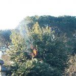 Albero in fiamme