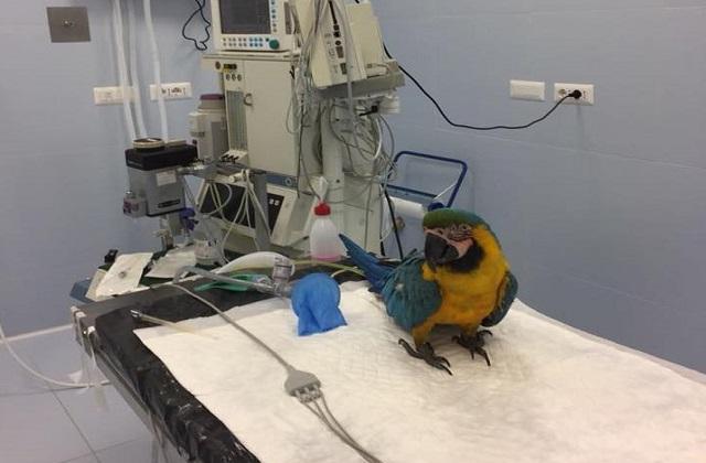 Franky nella sala operatoria