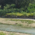 Lo stato degli argini del fiume Misa in zona Bettolelle