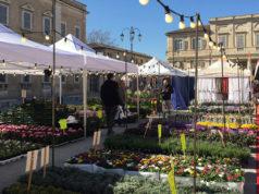 fiori e piante in piazza Garibaldi a Senigallia
