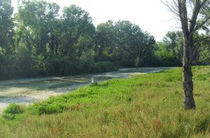 Il fiume Misa in zona Bettolelle: il punto dove sarà ristretto l'alveo per l'innesto delle vasche di espansione