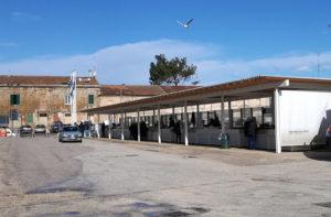 La pescheria del porto di Senigallia