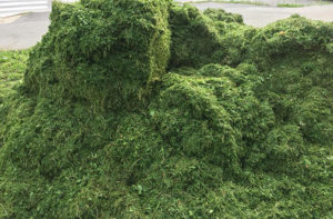 Sfalci di erba
