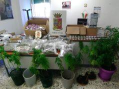 Le piantine e i prodotti di cannabis sequestrati dalla polizia