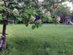 I giardini di via Rovereto a Senigallia