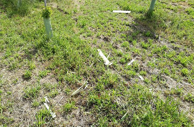 Residui di plastica al parco della Cesanella di Senigallia