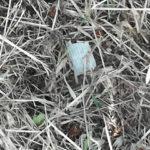 Piccoli pezzi nascosti nell'erba