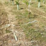 Residui lasciati tra le piante al parco della Cesanella di Senigallia