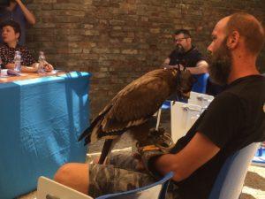 Il falco addestrato