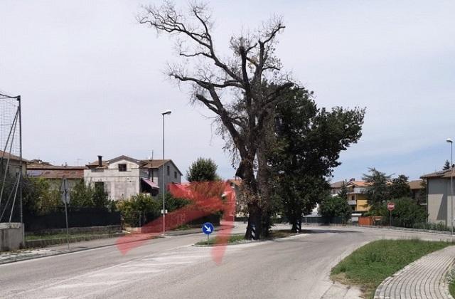 La quercia a Osimo Stazione