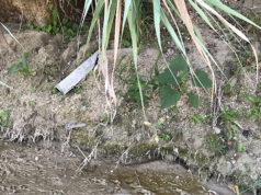 L'amianto rinvenuto sul fiume Cesano