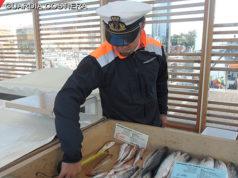 I controlli della Guardia Costiera sul pesce in vendita al porto di Senigallia: due multe