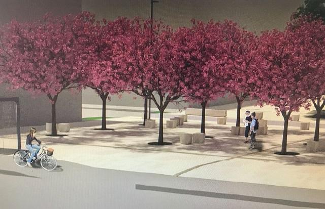 Rendering della nuova Piazza del Crocifisso con i ciliegi
