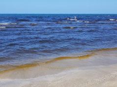 L'acqua del mare di Senigallia con la fioritura dell'alga