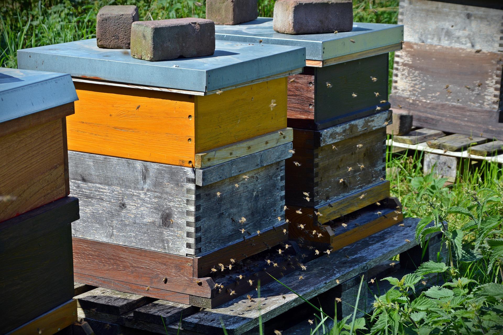 Caldo, crolla la produzione di miele nelle Marche -50% nel 2018