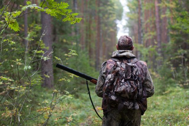 Animalisti e ambientalisti ad Acquaroli: «Stop alla caccia al cinghiale, crea assembramento»