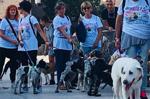"""La sfilata dei cani a Senigallia con l'evento """"Finalmente a casa"""""""